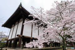 桜咲く法隆寺_02