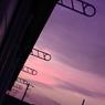CANON Canon EOS Kiss X2で撮影した風景(紫色)の写真(画像)