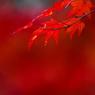 CANON Canon EOS Kiss X2で撮影した風景(赤色)の写真(画像)