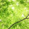 CANON Canon EOS Kiss X2で撮影した風景(若葉色)の写真(画像)