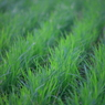 CANON Canon EOS Kiss X2で撮影した風景(緑色)の写真(画像)