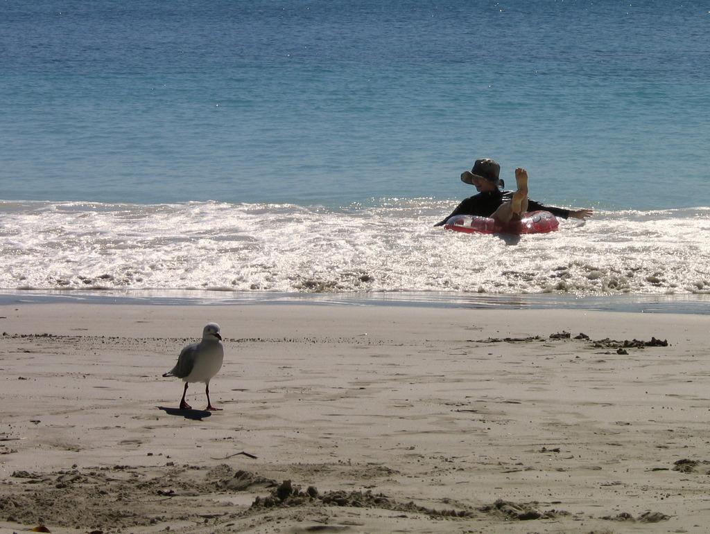 波に戯れる娘と、忙しそうなカモメ