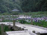 菖蒲園19