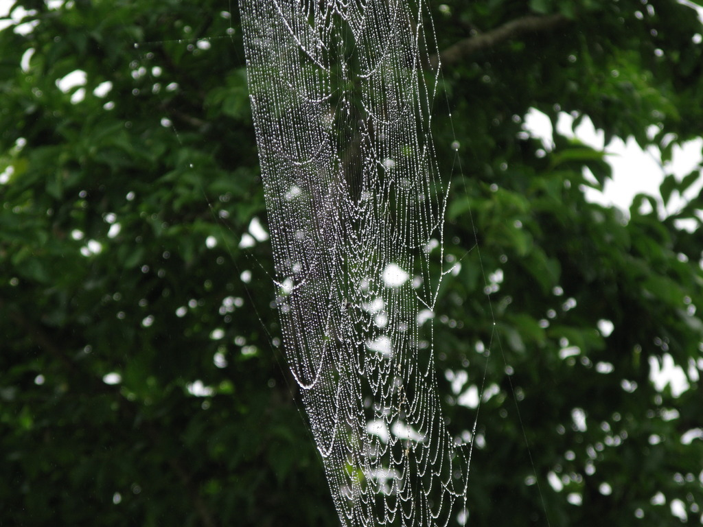 蜘蛛の巣 002