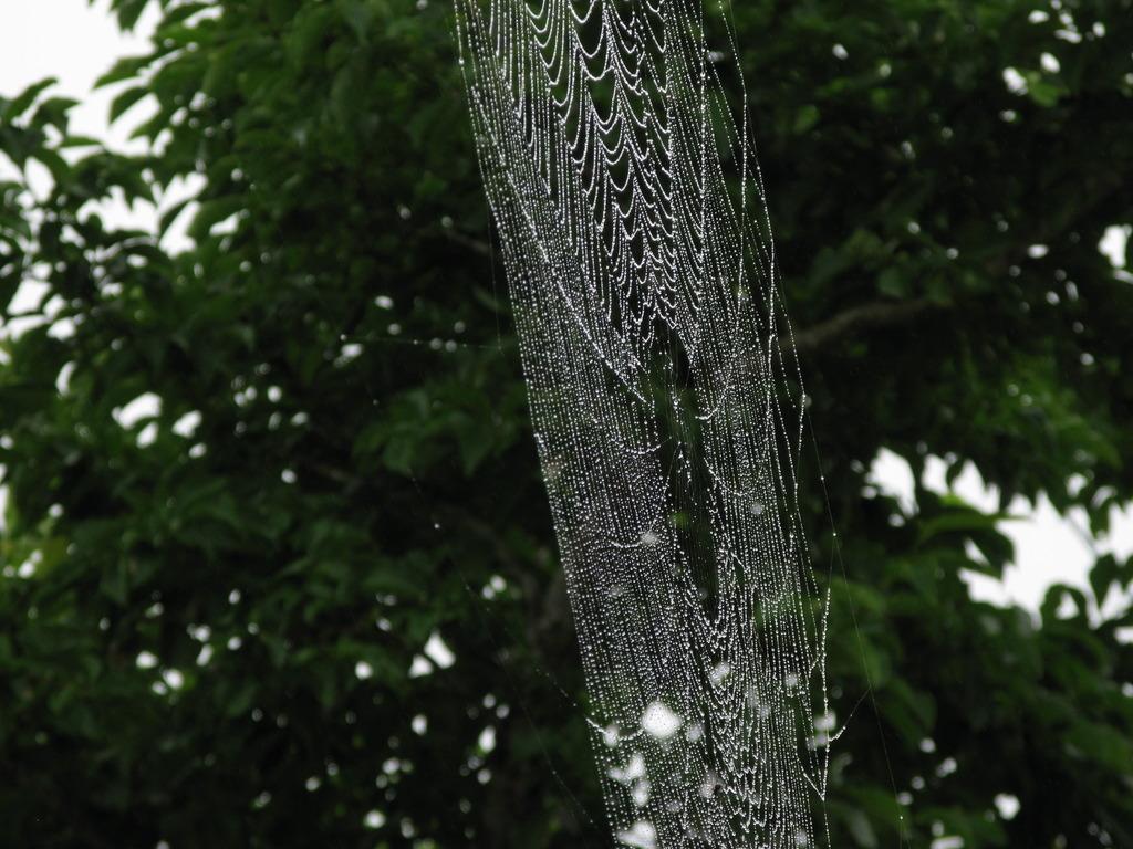 蜘蛛の巣 003