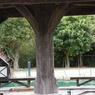 FUJIFILM FinePix S8000fdで撮影した風景(ローズマリー公園25)の写真(画像)