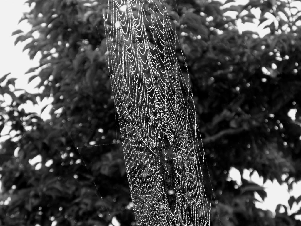 蜘蛛の巣 007