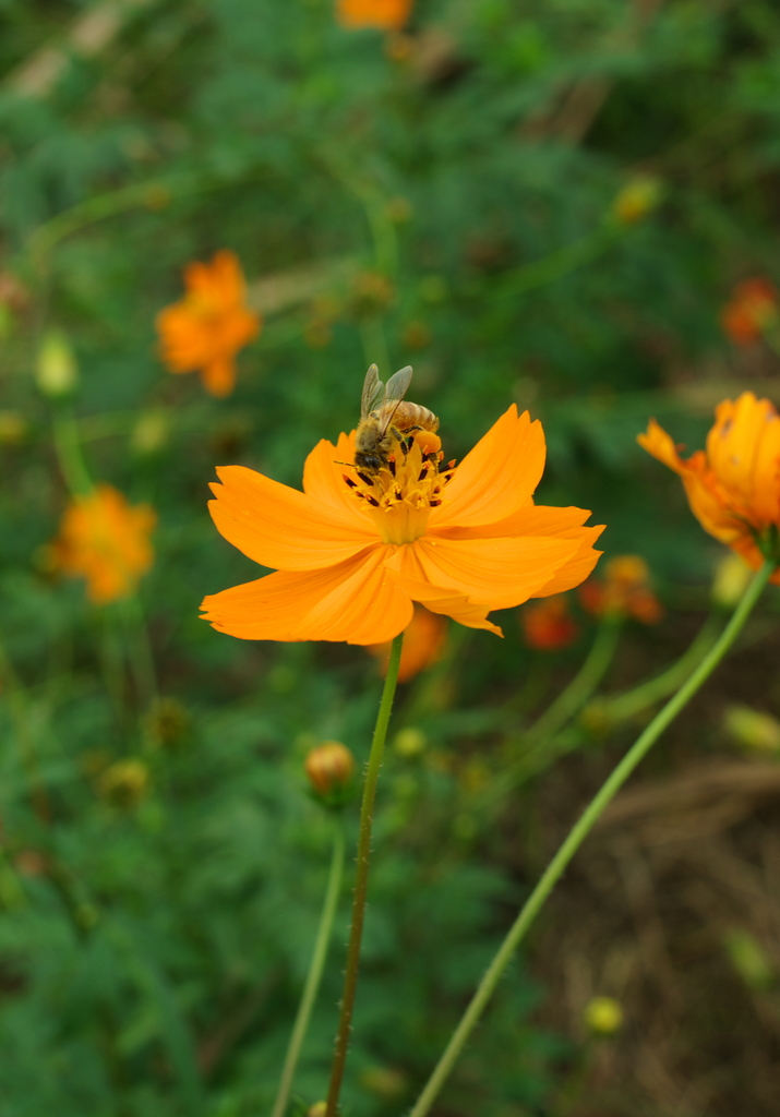 a worker bee