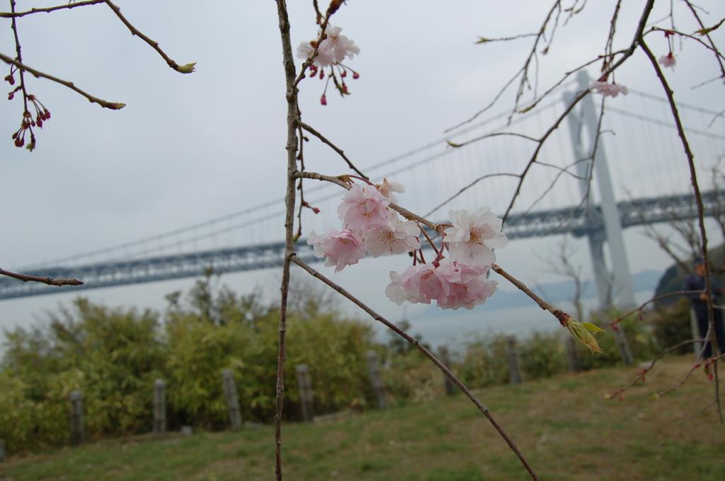 春の瀬戸大橋
