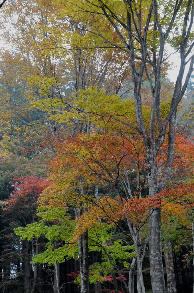 秋色を探して