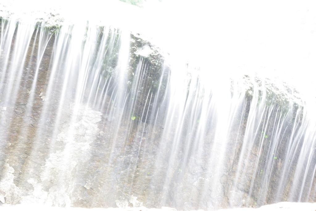 自然のカーテン。