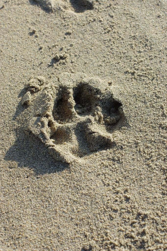 12月の砂浜で