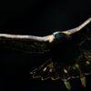 暗闇からの飛翔