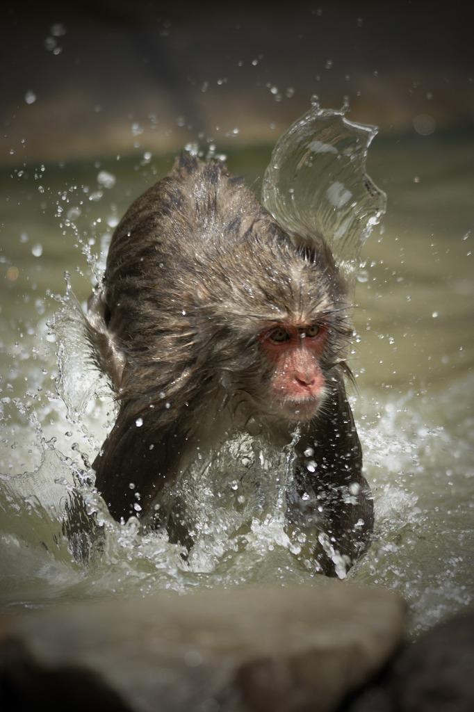 Water Mankey