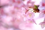 春はほんのり優しくね!^^