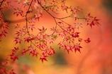 秋は、紅く紅く