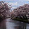 水辺の桜並木