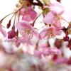 心うき立たせる・・・春咲いてゆく