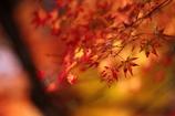秋の味わい