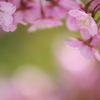 春は甘美でやわらかくて