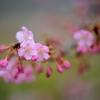 春 ~メッセージ