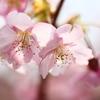春の色柔らかく