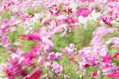 お花畑に風が吹く