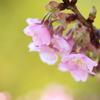 浅き緑に春の夢