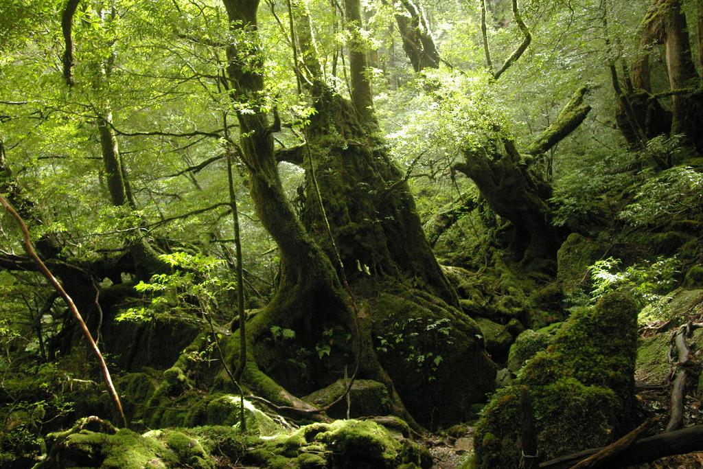 もののけの森1