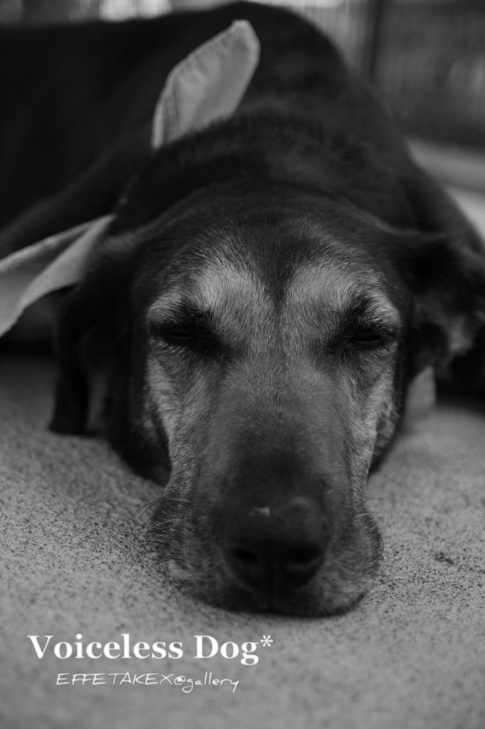 Voiceless Dog