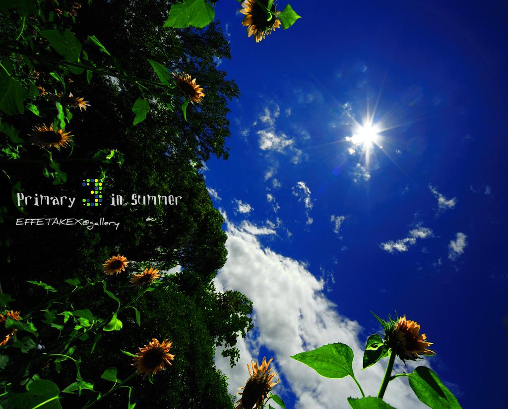 夏の三原色