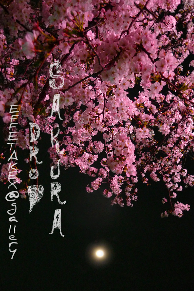 SAKURA Drop