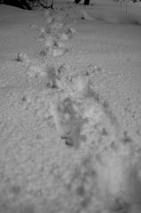 足跡...