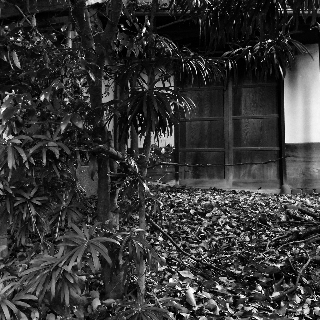 落ち葉の玄関