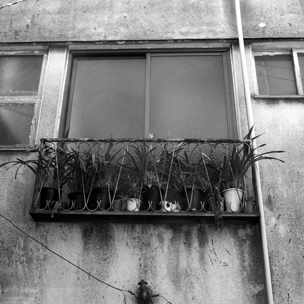 バルコニーの植木鉢