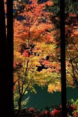 紅葉2009 伊奈ヶ湖(山梨県)