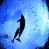 """共に・・生きる """"Dolphin"""""""