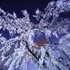 桜に願う思い・・