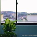 CANON Canon EOS 450Dで撮影した植物(green)の写真(画像)