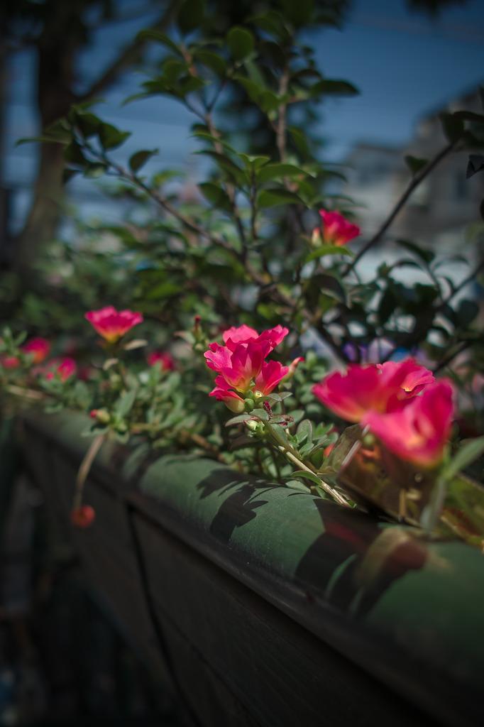 空気水の中の花