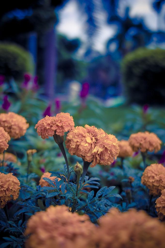 淡い記憶の花