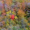 Autumn colors・・・♡