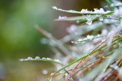 雪の朝・・・♬