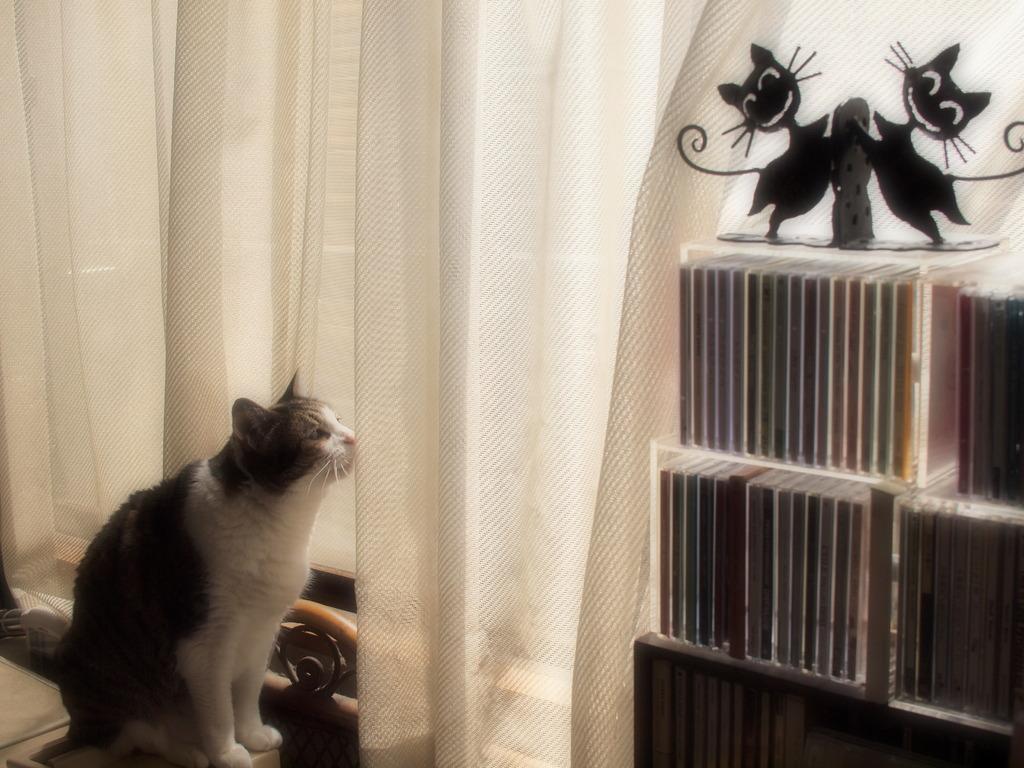 猫が猫を見る