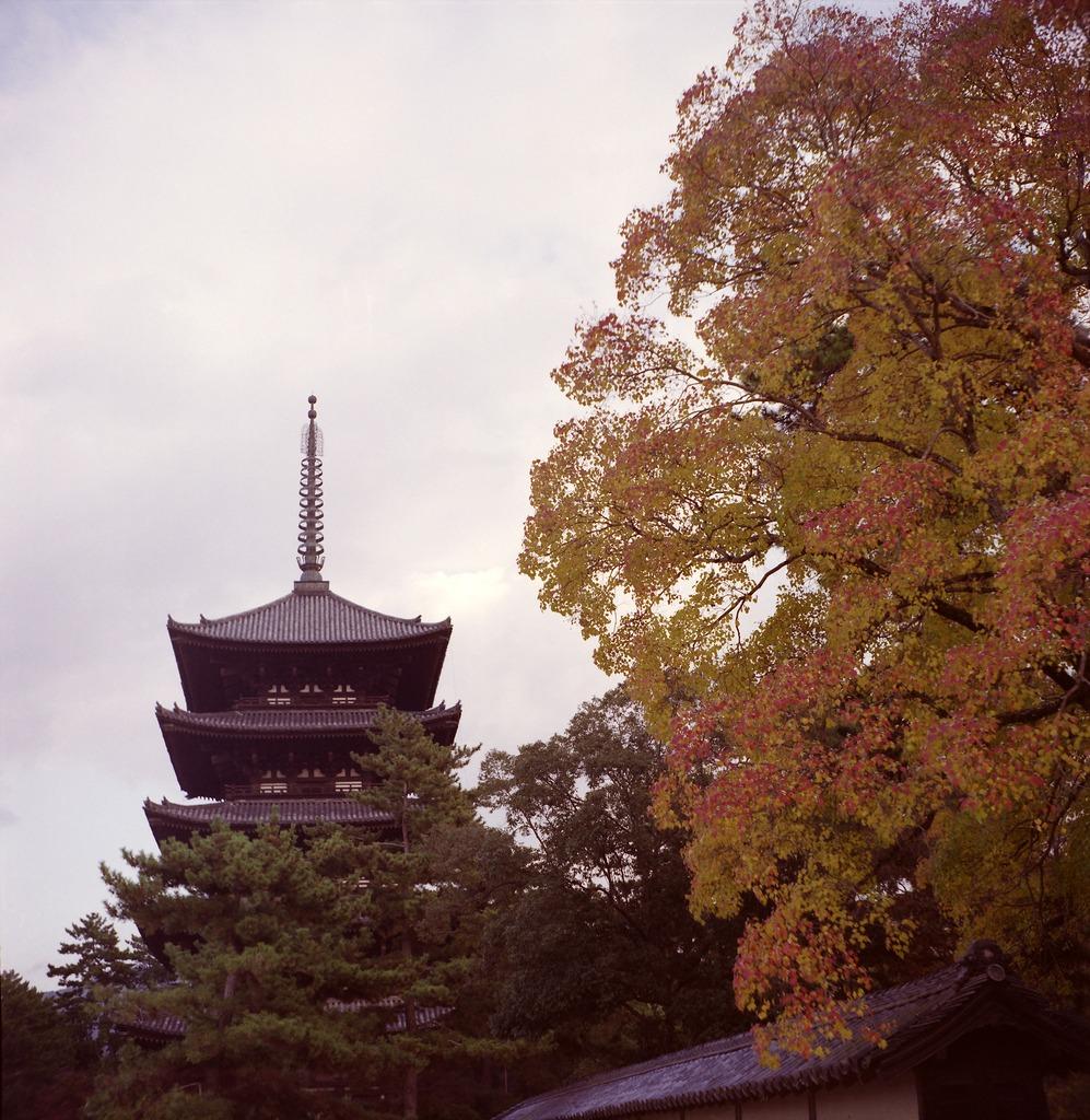 興福寺の紅葉