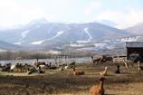 アルパカ牧場