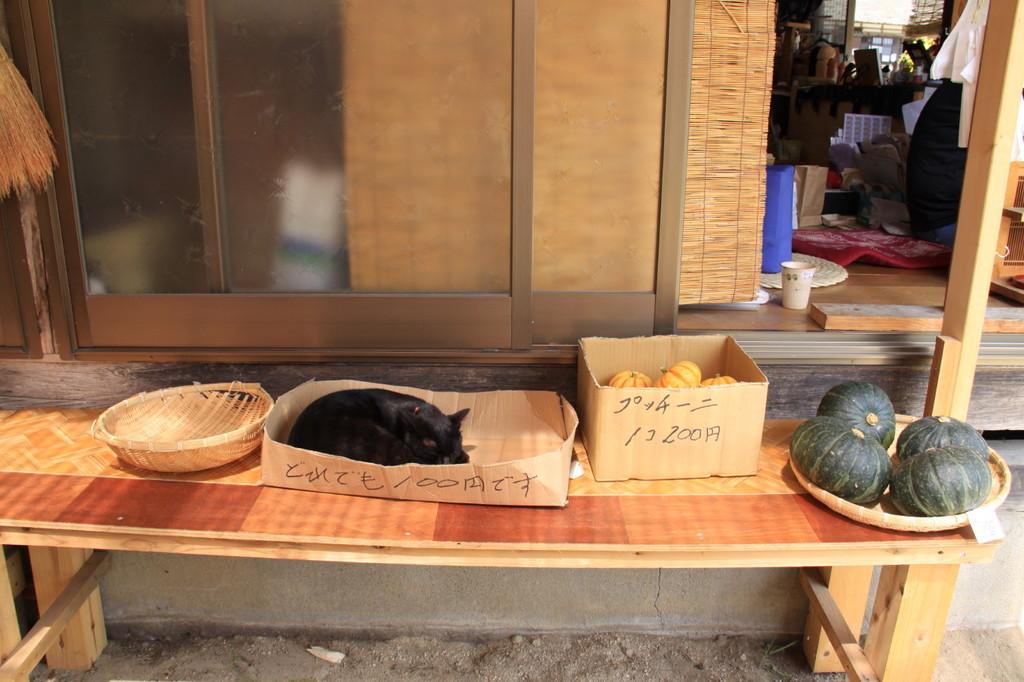 この猫100円