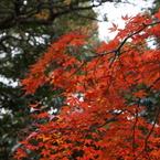 SONY NEX-5Nで撮影した風景(永源寺-1)の写真(画像)