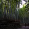 冬の嵯峨野竹林-1
