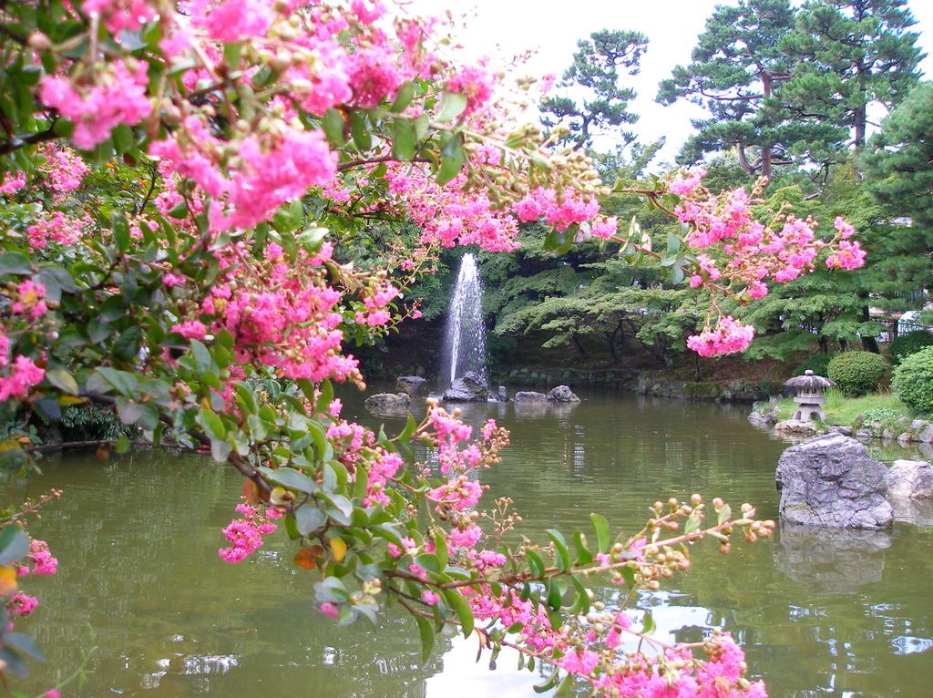 朝、円山公園の風景